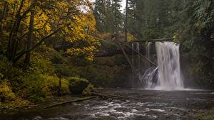 Обои Осень Америка Водопады Реки Дерева Oregon, Silver Falls State Park, Upper North Falls, Silver Creek