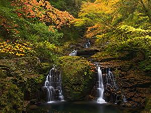 Обои Осень Водопады Леса Листья Мох Ручей Природа
