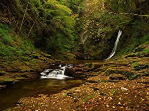 Картинки Осень Водопады Мох Ручей Природа
