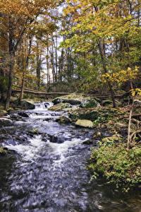 Картинки Осенние Водопады Камень Деревья