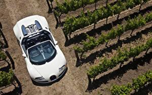 Фотография BUGATTI Белых Кабриолет Сверху Родстер 2008-12 Veyron Grand Sport Roadster машины
