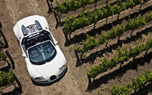 Фотография BUGATTI Белый Кабриолет Сверху Родстер 2008-12 Veyron Grand Sport Roadster Машины