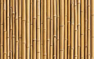 Фотографии Бамбук Текстура Много Природа