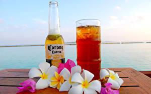 Картинка Пиво Плюмерия Бутылки Стакана Corona Extra Еда Цветы