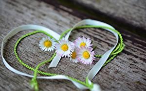 Картинки Маргаритка День всех влюблённых Ленточка Сердечко цветок