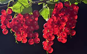 Картинки Ягоды Много Смородина Красных Листья
