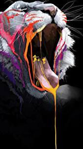Фотография Большие кошки Лев На черном фоне Зевок Язык (анатомия) Усы Вибриссы животное