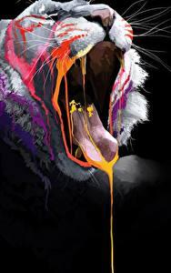 Фотография Большие кошки Львы Черный фон Зевает Язык (анатомия) Усы Вибриссы Животные