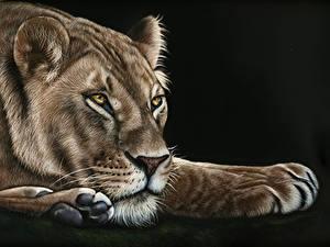 Фотография Большие кошки Львы Рисованные Львица Черный фон Лап Животные