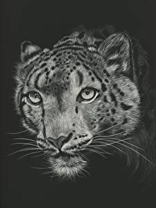 Картинка Большие кошки Ирбис Рисованные Голова Черный фон Усы Вибриссы Черно белое Морда Животные
