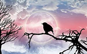 Картинка Птицы Ветвь Луна Силуэты