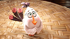 Фотография Птицы Перья Злые сердитые птицы