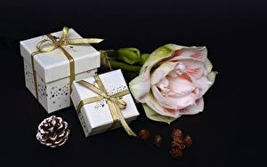 Картинка На черном фоне Шишка Ленточка Бантик Подарок