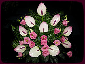 Картинка Букет Антуриум Лизантус Черный фон цветок