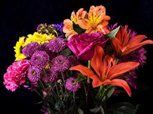 Обои Букеты Астры Лилия Роза Альстрёмерия Черный фон Цветы