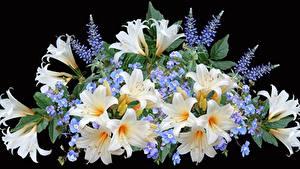Картинки Букеты Лилии На черном фоне Цветы