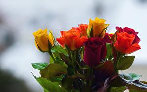 Картинки Букеты Розы Размытый фон Разноцветные