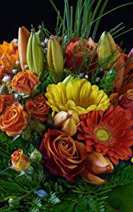 Картинки Букет Роза Герберы Тюльпаны цветок