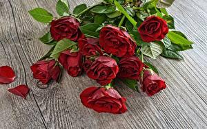 Фотография Букеты Роза Красных Цветы