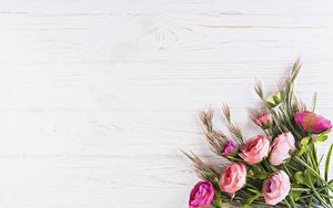 Обои для рабочего стола Букеты Роза Шаблон поздравительной открытки Цветы