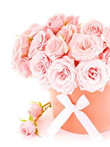 Картинка Букеты Розы Белый фон Розовая Бантик Цветы