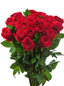 Обои Букеты Розы Белый фон Красный Цветы