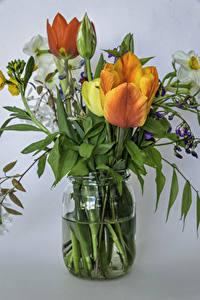 Обои Букет Тюльпан Нарциссы Сером фоне Банке цветок