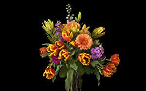 Картинки Букеты Тюльпаны Герберы Маттиола Черный фон Цветы