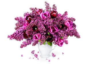 Фотография Букет Тюльпаны Сирень Ваза Белым фоном Цветы