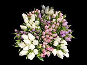 Фото Букеты Тюльпаны Много На черном фоне Цветы