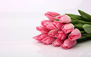 Обои для рабочего стола Букет Тюльпан Розовая цветок