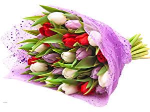 Фотография Букет Тюльпан Белый фон Разноцветные цветок