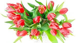 Фотография Букет Тюльпан Белом фоне Красная цветок