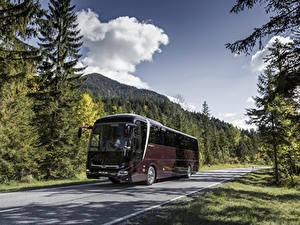 Фото Автобус Темно красный Металлик 2017 MAN Lion's Coach C Автомобили