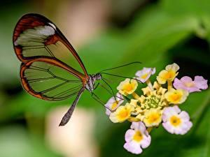 Фото Бабочка Крупным планом Размытый фон Животные