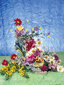 Фотография Ромашка Гвоздики Дизайн Цветы