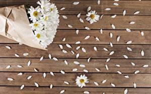 Картинки Ромашки Доски Лепестки Цветы