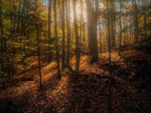 Обои Канада Осенние Лес Дерево Листва Copeland forest near Barrie