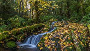 Фотография Канада Осень Леса Водопады Листья Мох Ручей Matheson Creek Природа