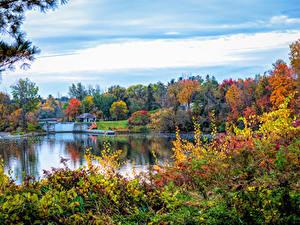 Обои Канада Осень Река Дерева Кустов Canmore Alberta