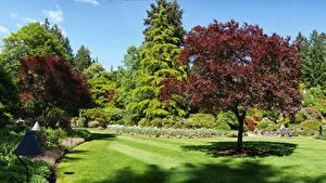 Фотографии Канада Сады Дерева Газон Кусты Butchart Gardens Природа
