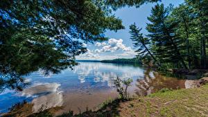 Обои Канада Озеро Деревья Облака Отражается Bark Lake