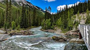 Фотография Канада Гора Леса Река Парки Мосты Пейзаж Банф Ели Природа