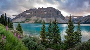 Обои Канада Горы Озеро Облака Bow Lake Природа