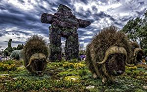 Фотографии Канада Парк Бизон Дизайн HDR Ottawa Ontario Природа