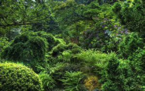 Обои Канада Парки Кусты Дерево Butchart Gardens Victoria Природа