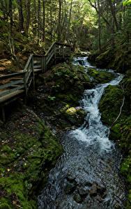 Фотография Канада Парки Леса Мост Камень Дерева Мха Ручей Fundy National Park Природа