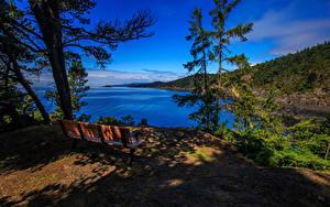 Фото Канада Парки Озеро Пейзаж Ель Скамейка East Sooke Park Природа