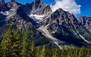 Обои для рабочего стола Канада Парк Гора Лес Банф Мха Природа