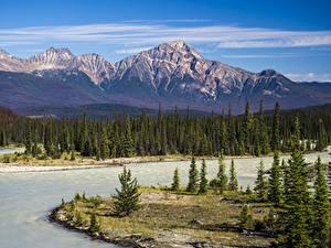 Фотографии Канада Парки Гора Река Пейзаж Джаспер парк Ель Athabasca River Природа